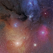 Reflection Nebula Posters - The Starforming Region Of Rho Ophiuchus Poster by Phillip Jones