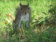 Squirrel Photos - The Staring Contest by Robert Wolverton Jr