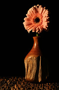 Gerber Daisy Art - The Still Life by JC Findley
