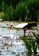 Reed Pastels Prints - The Stork Print by Stefan Kuhn