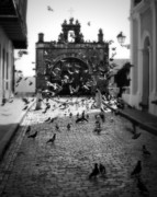 Old San Juan Photo Prints - The Street Pigeons Print by Perry Webster