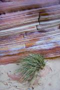 Cowboy Colors Framed Prints - The Striations And Banding Of A Rock Framed Print by Taylor S. Kennedy