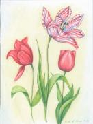 Tulips Drawings Prints - The Striped One Print by Linda Kemp