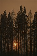 Woodland Scenes Framed Prints - The Sun Sets Behind A Smoke-choked Wood Framed Print by Raymond Gehman