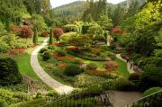 Vancouver Island Framed Prints - The Sunken Garden At Butchart Gardnes Framed Print by Darlyne A. Murawski