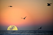 Supermoon Photos - The Supermoon Effect by Emily Stauring
