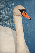 Fauna Mixed Media Acrylic Prints - The swan Acrylic Print by Angela Doelling AD DESIGN Photo and PhotoArt