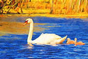 Goose Digital Art Posters - The Swan Family . Photoart Poster by Wingsdomain Art and Photography