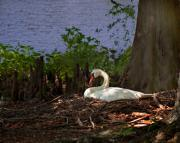 Lake Digital Art - The Swan by Gary Adkins