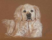 Best Friend Pastels Posters - The Sweet Old Golden Poster by Terry Kirkland Cook