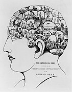 Theories Posters - The Symbolical Head, Illustrating All Poster by Everett
