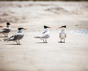 Seabirds Photos - The Talking Terns by Lisa Russo