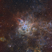 Tarantula Framed Prints - The Tarantula Nebula Framed Print by Ken Crawford