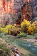 Virgin River Prints - The Temple of Sinawava in Zion national park Print by Pierre Leclerc