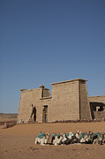 Camel Photos - The Temple With A Line Of Camels by Taylor S. Kennedy