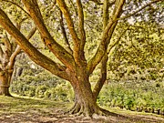 Textured Tree Prints - The Textured Tree Print by Sharon Lisa Clarke