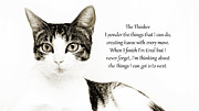 Cat Art Photos - The Thinker by Andee Photography