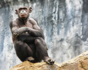 Primates Originals - The Thinker by Arthur Bohlmann