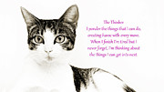 Cat Art Prints - The Thinker Pink Print by Andee Photography