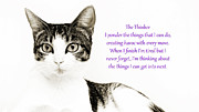 Cat Art Prints - The Thinker Purple Print by Andee Photography