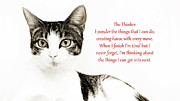Cat Art Prints - The Thinker Red Print by Andee Photography