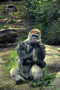 Ape Photo Originals - The Thinker by William Fields