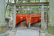 Torii Photos - The Thousand Gates by Rob Tilley