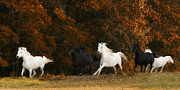 Running Horses Photos - The Thracian Mares by Ron  McGinnis
