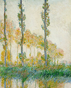 Reflecting Trees Paintings - The Three Trees by Claude Monet
