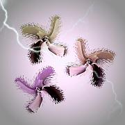 Thunder Storm Mixed Media Posters - The Thunderbolt Dance of Rose Butterflies - 1 Poster by Jacqueline Migell