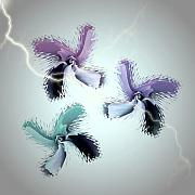 Thunder Storm Mixed Media Posters - The Thunderbolt Dance of Rose Butterflies - 3 Poster by Jacqueline Migell