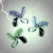 Thunder Storm Mixed Media Posters - The Thunderbolt Dance of Rose Butterflies - 4 Poster by Jacqueline Migell