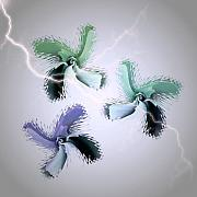 Thunder Storm Mixed Media Posters - The Thunderbolt Dance of Rose Butterflies - 5 Poster by Jacqueline Migell