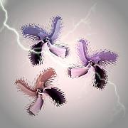 Thunder Storm Mixed Media Posters - The Thunderbolt Dance of Rose Butterflies - 6  Poster by Jacqueline Migell