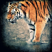 Animals Mixed Media Posters - The Tiger Poster by Angela Doelling AD DESIGN Photo and PhotoArt