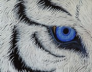 The Tiger Paintings - The Tigers Eye  by Benita Solomon