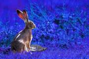 Hares Posters - The Tortoise and the Hare . Blue Poster by Wingsdomain Art and Photography