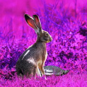 Hare Digital Art Prints - The Tortoise and the Hare . Magenta Square Print by Wingsdomain Art and Photography