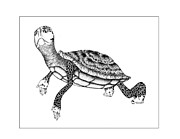 Reptiles Drawings - The Tortoise by Zelde Grimm
