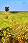 Italian Landscape Photo Posters - The tree and the furrows Poster by Silvia Ganora
