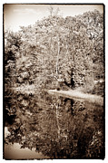 Pine Barrens Prints - The Tree in the Lake Print by John Rizzuto
