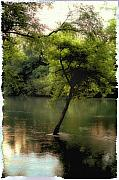Heber Springs Prints - The Tree Island Print by Ken Gimmi