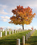 Arlington Photos - The Tree by JC Findley