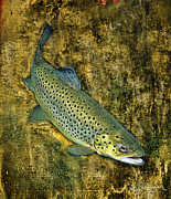 Trout Mixed Media Prints - The Trout Print by Neal Wiseman