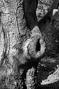 Knot Hole Prints - The Trunk Print by Judith Szantyr