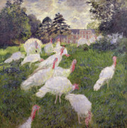 Impressionism Glass Framed Prints - The Turkeys at the Chateau de Rottembourg Framed Print by Claude Monet