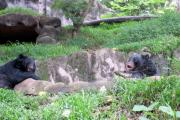 Siddarth Rai - The Two Black Bears
