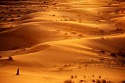 Desert Photos - The Valley of the Shadow by Skip Hunt