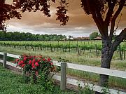 Wine Vineyard Photo Originals - The Vineyard by Jim Sweida