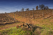 Grapevines Prints - The Vineyard Print by Kurt Golgart